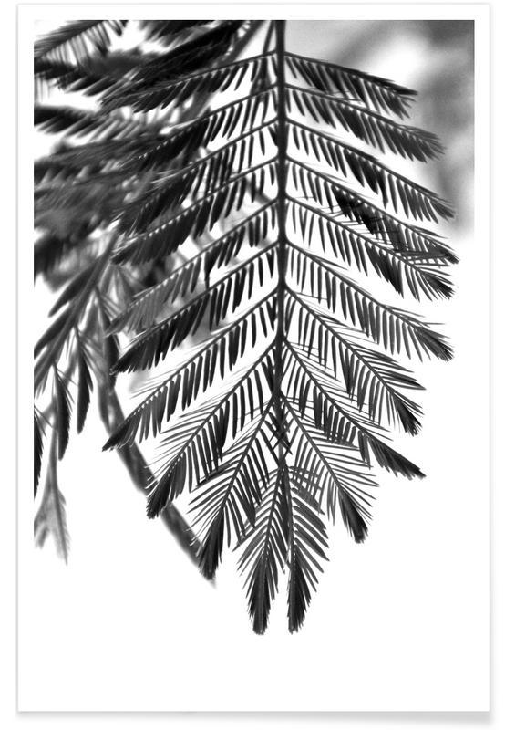 Feuilles & Plantes, Delicate & Beautiful Plants affiche