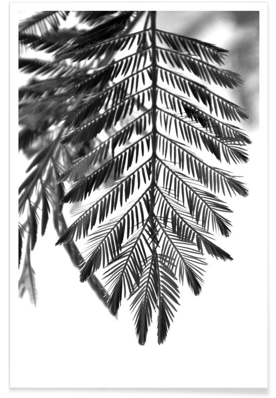 Leaves & Plants, Delicate & Beautiful Plants Poster