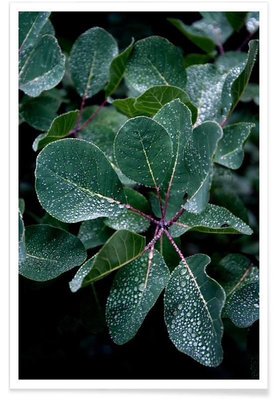 Bladeren en planten, Misty Forest Morning poster