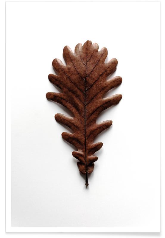 Feuilles & Plantes, Shapes - Grafic Oak Leaf affiche