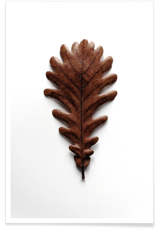 Leaves & Plants, Shapes - Grafic Oak Leaf Poster