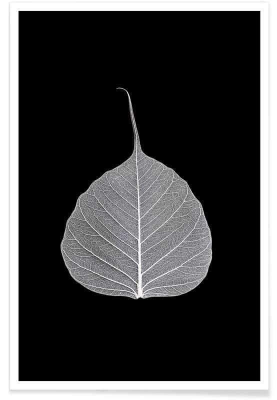 Feuilles & Plantes, Veins of Life 2 - White Leaf affiche