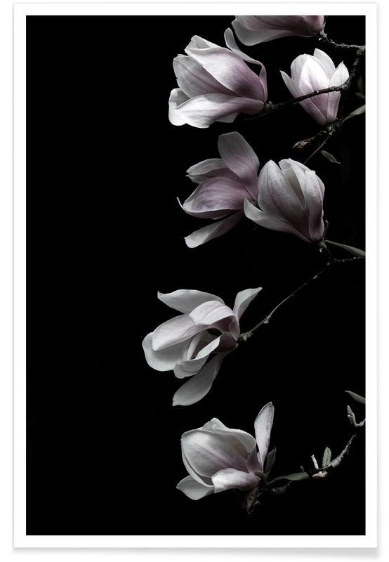 Blätter & Pflanzen, Minimal Magnolia On Black -Poster