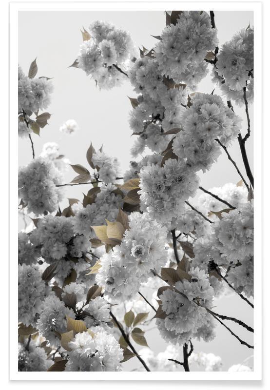 Blätter & Pflanzen, White Spring Blossoms -Poster