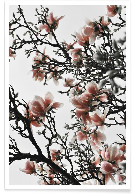 Feuilles & Plantes, Beautiful Blush Magnolia affiche