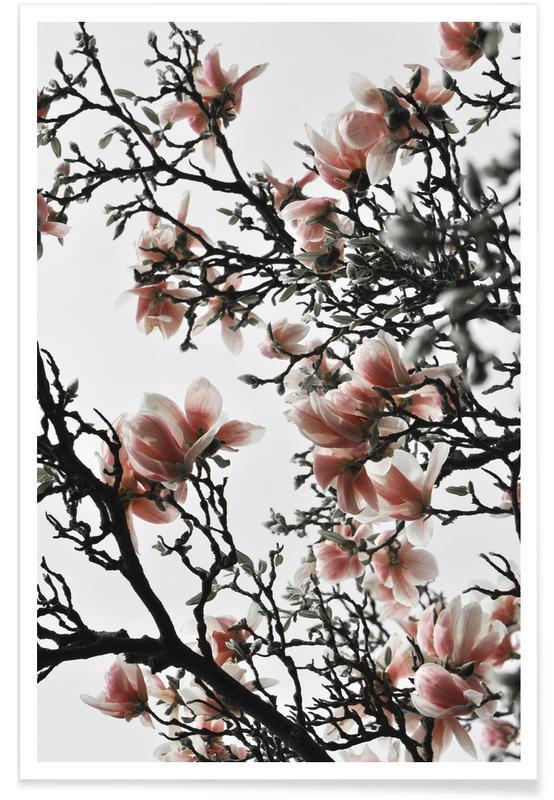 Leaves & Plants, Beautiful Blush Magnolia Poster