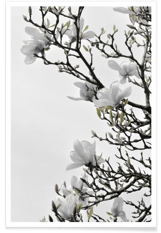 Blätter & Pflanzen, White Magnolia Happiness -Poster