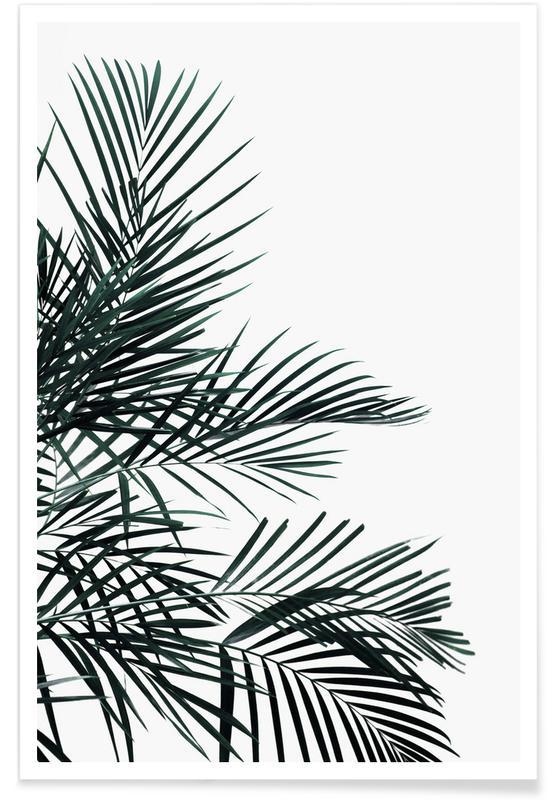 Paysages abstraits, Feuilles & Plantes, Palmiers, Lush Tropical Palms affiche