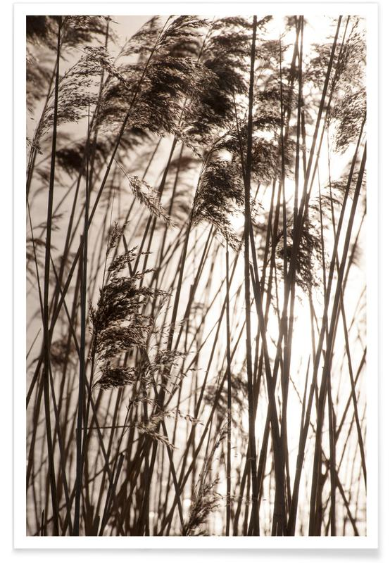 Abstrakte Landschaften, Sonnenuntergänge, Grasses In The Golden Sunset -Poster