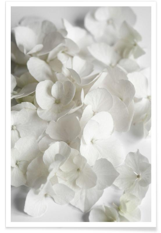 White Beauty Poster