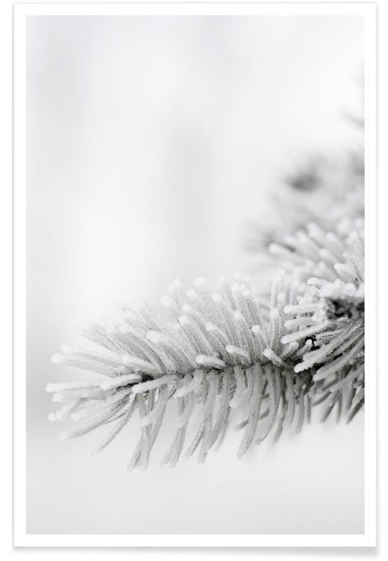 Noir & blanc, Arbres, White affiche