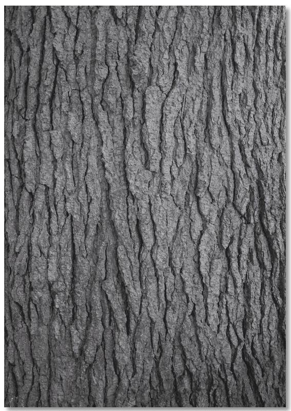Noir & blanc, Arbres, Hug a Tree Notebook