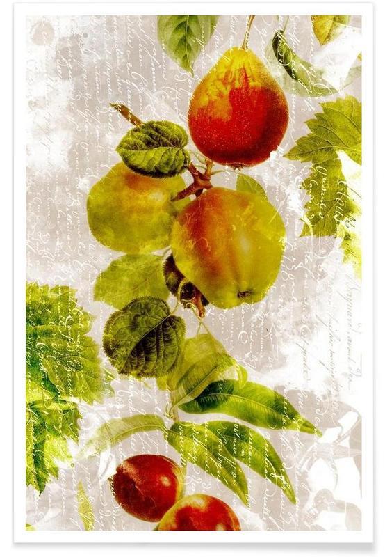 Äpfel, Botanic 3 -Poster