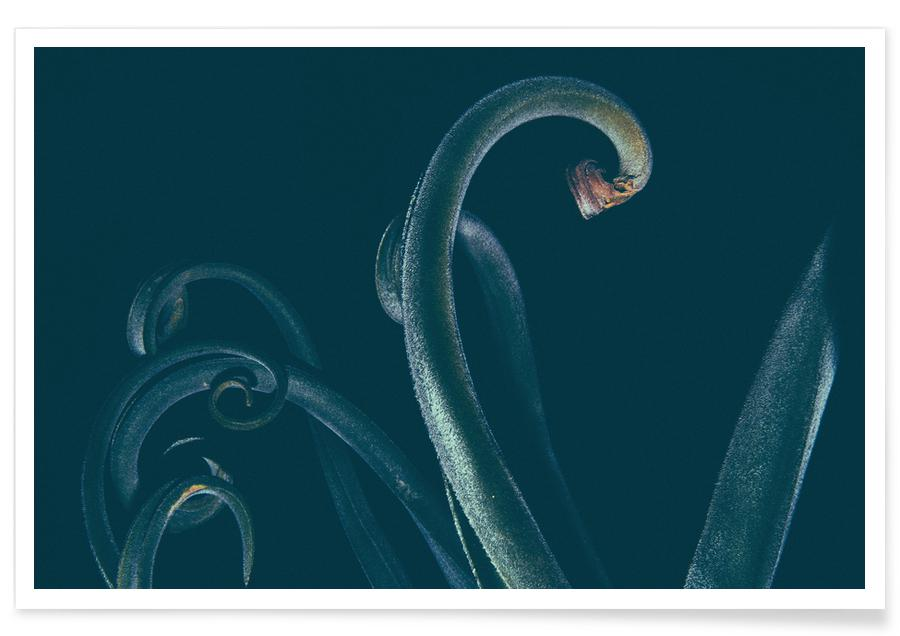 Blätter & Pflanzen, The Curve -Poster
