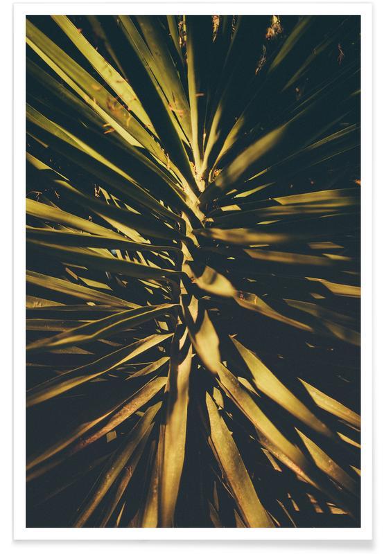 Blätter & Pflanzen, Palmen, The Palm II -Poster