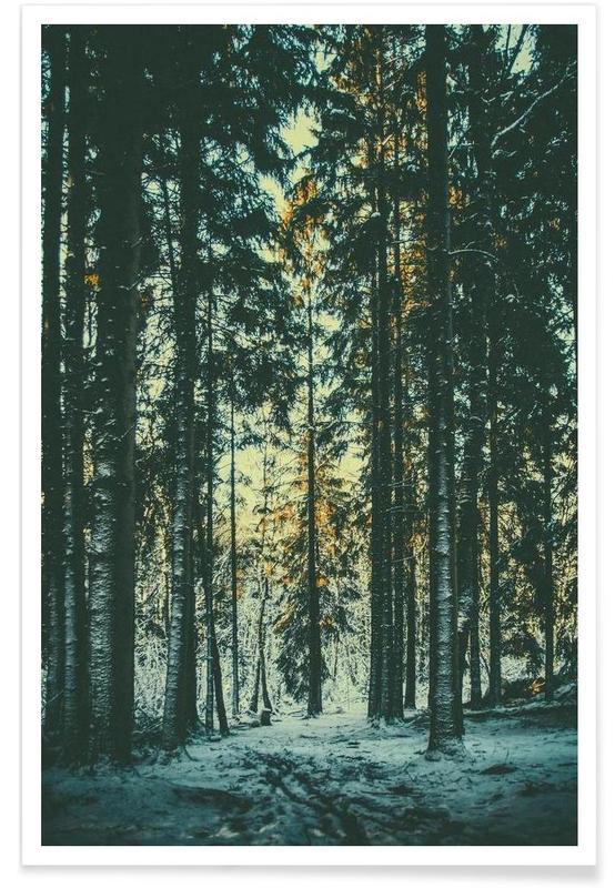 Photographie d'arbres de la forêt affiche