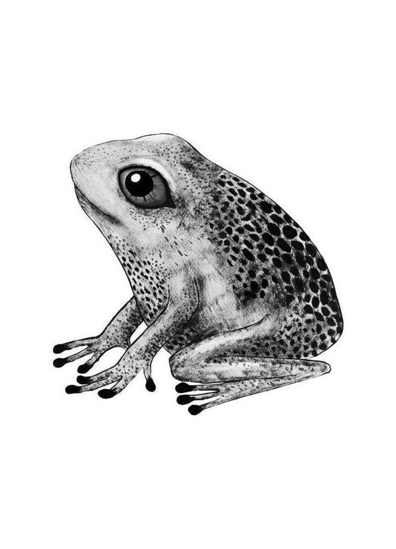 Frog canvas doek