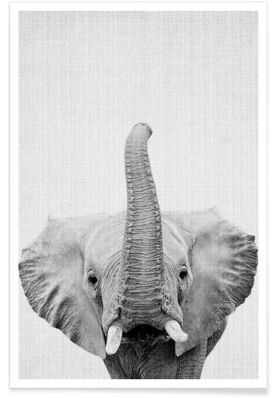 Elephant Black & White Photograph poster