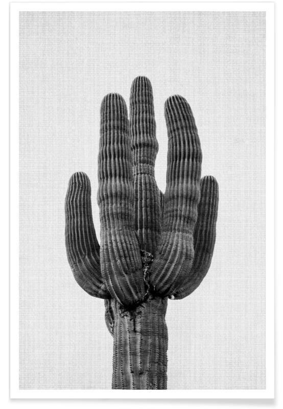 Noir & blanc, Cactus, Print 91 affiche