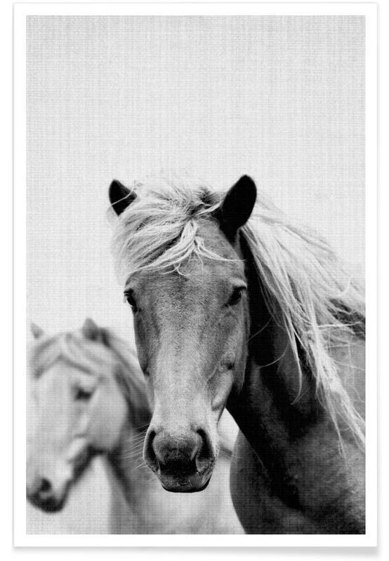 Chevaux, Noir & blanc, Photo monochrome de chevaux affiche