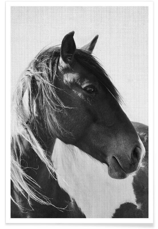 Dark Horse Monochrome Photograph Poster