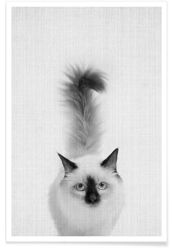 Zwart en wit, Kunst voor kinderen, Katten, Kat monochrome foto poster