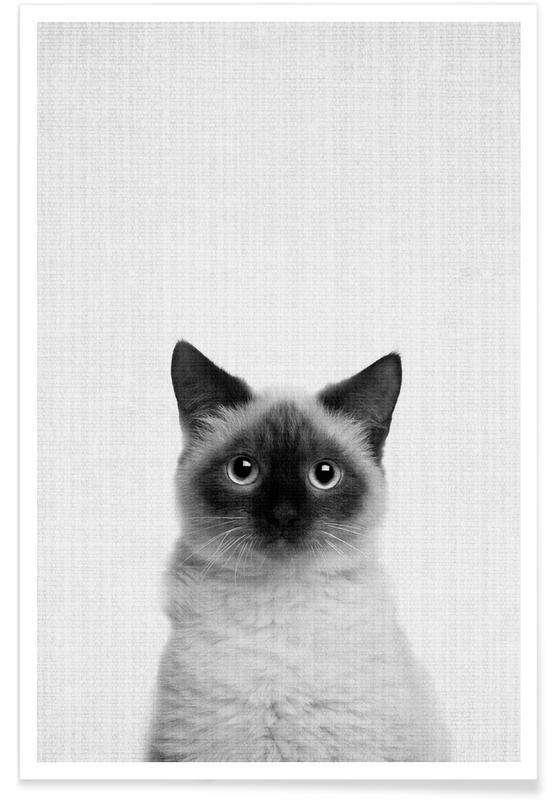 Katzen, Schwarz & Weiß, Kinderzimmer & Kunst für Kinder, Katze-Schwarz-Weiß-Fotografie -Poster