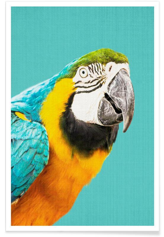 Art pour enfants, Perroquets, Perroquet - Photo affiche