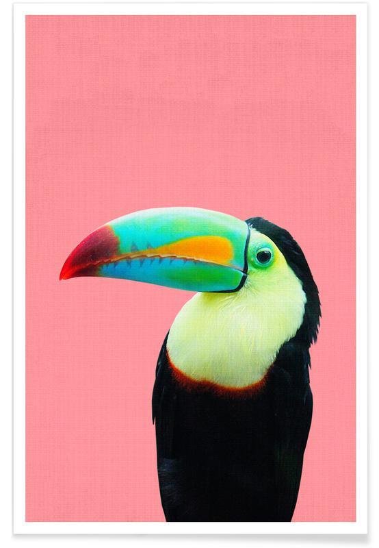 Toucans, Børneværelse & kunst for børn, Toucan Colour Photograph Plakat