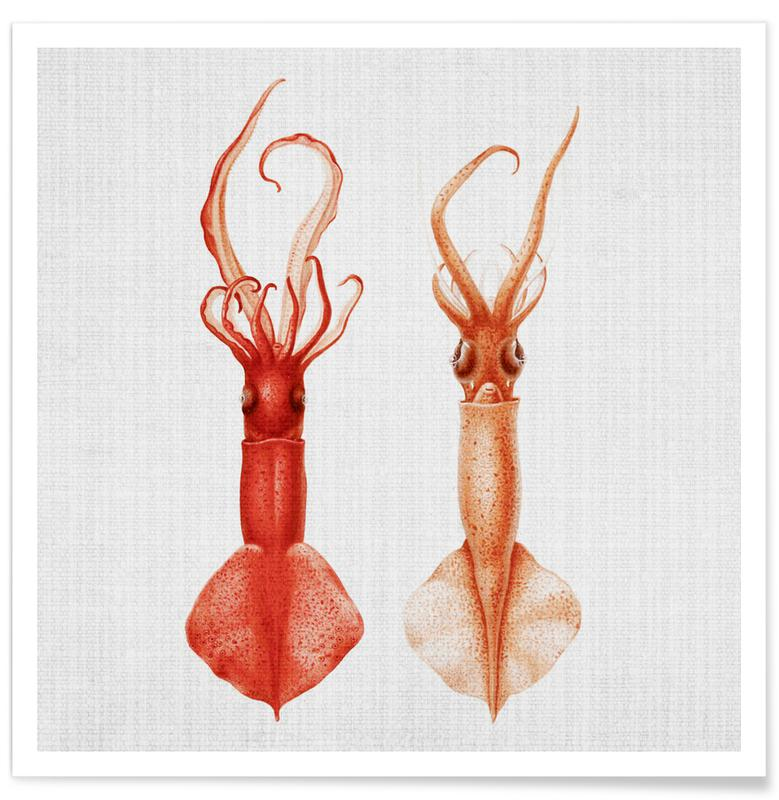 Pieuvres, Petits poulpes - Photo couleur affiche