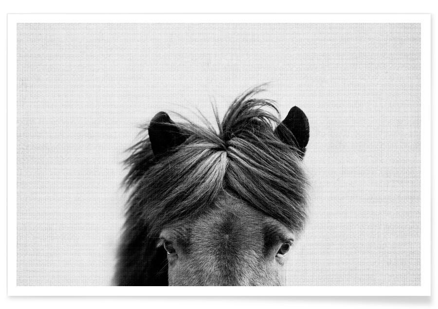 Horses, Black & White, Horse Black & White Photograph Poster