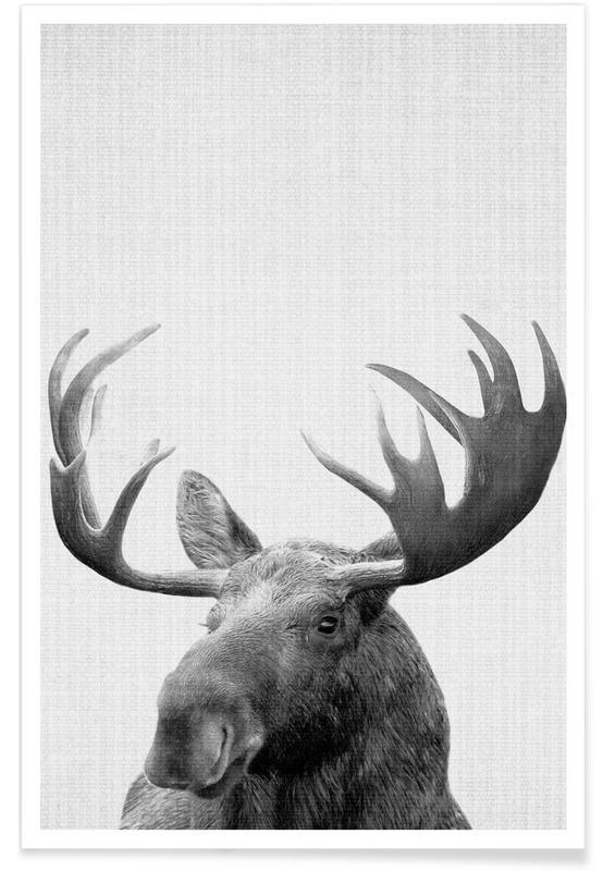 Eland zwart-wit foto poster