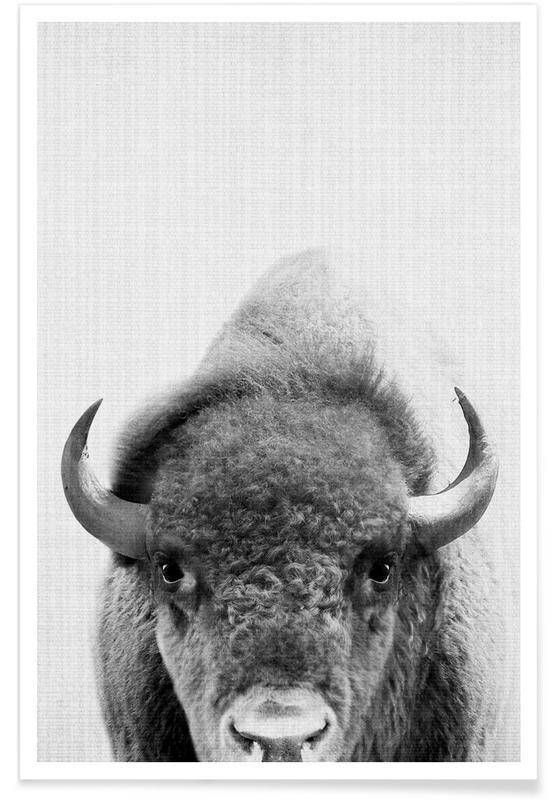 Noir & blanc, Buffles, Bison - Photo en noir et blanc affiche