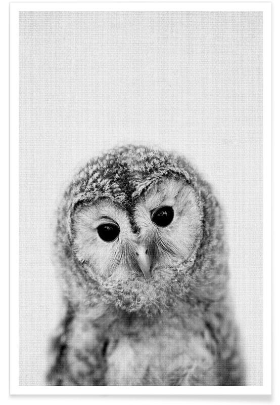 Hibou - Photo en noir et blanc affiche