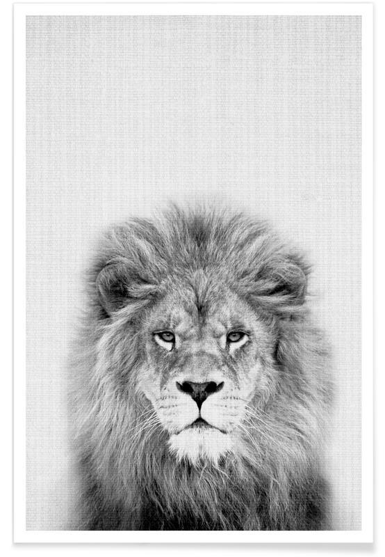 Børneværelse & kunst for børn, Sort & hvidt, Løver, Lion Black & White Photograph Plakat