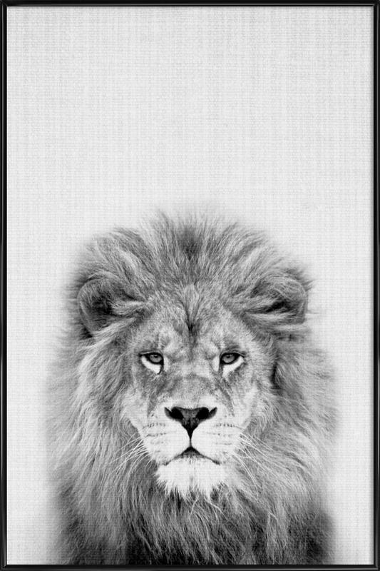 Lion Framed Poster