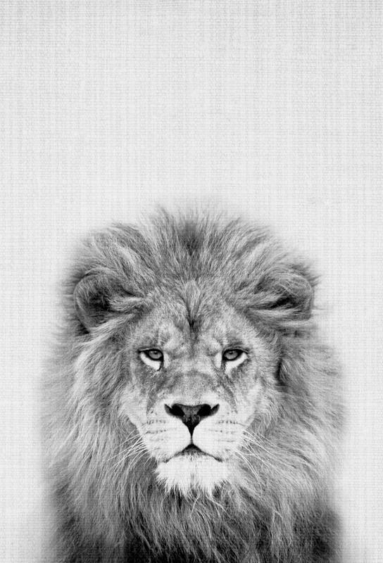 Lion acrylglas print