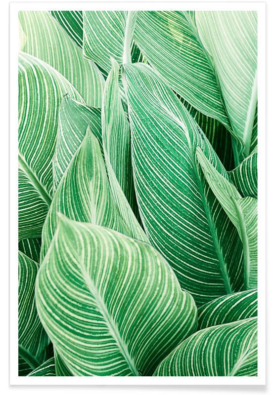 Leaves & Plants, Print 144 Poster
