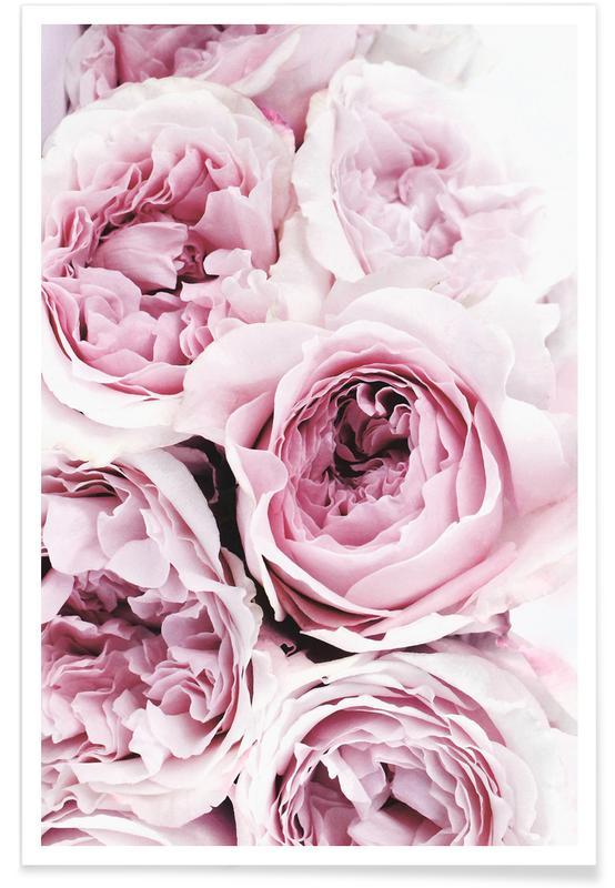 Roses, Photographie de roses roses affiche