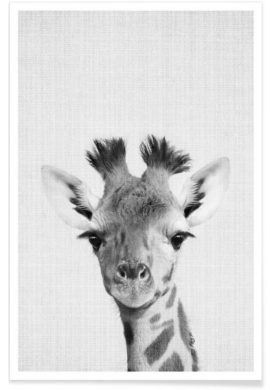 Arte para niños, Jirafas, Blanco y negro, Giraffe Monochrome Photograph póster