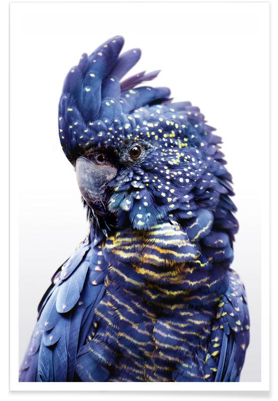 Art pour enfants, Perroquets, Perroquet bleu - Photo en noir et blanc affiche