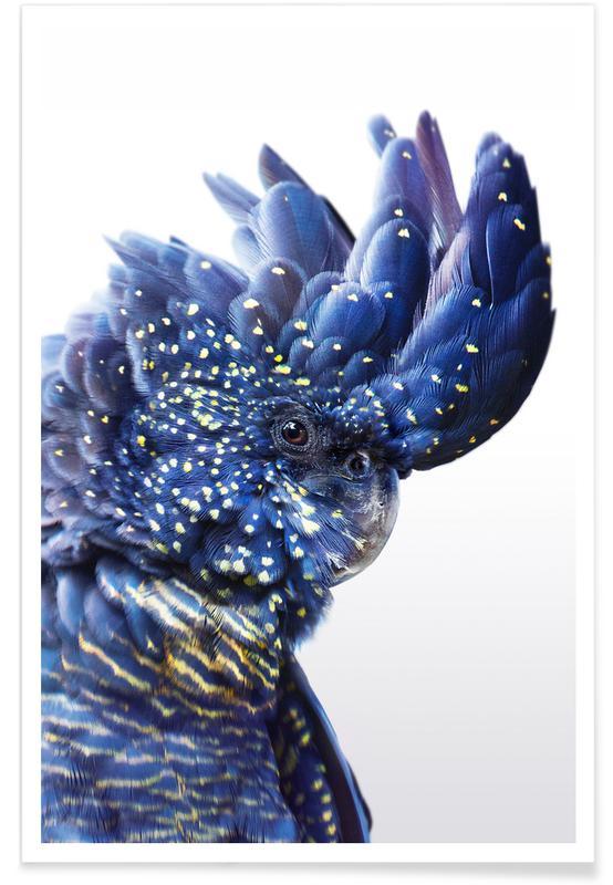 Art pour enfants, Perroquets, Perroquet - Photo couleur affiche
