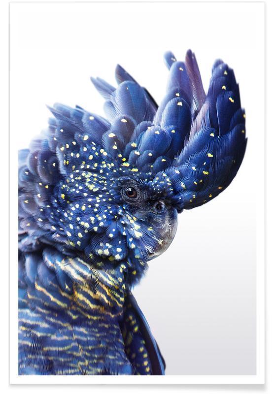 Nursery & Art for Kids, Parrots, Parrot Colour Photograph Poster