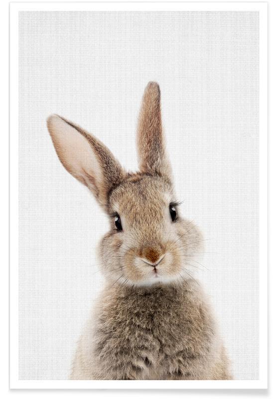 Lapins, Art pour enfants, Bébé lapin - Photo couleur affiche