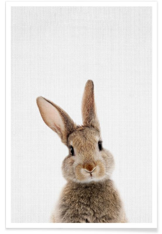 Baby Rabbit Colour Photograph Plakat