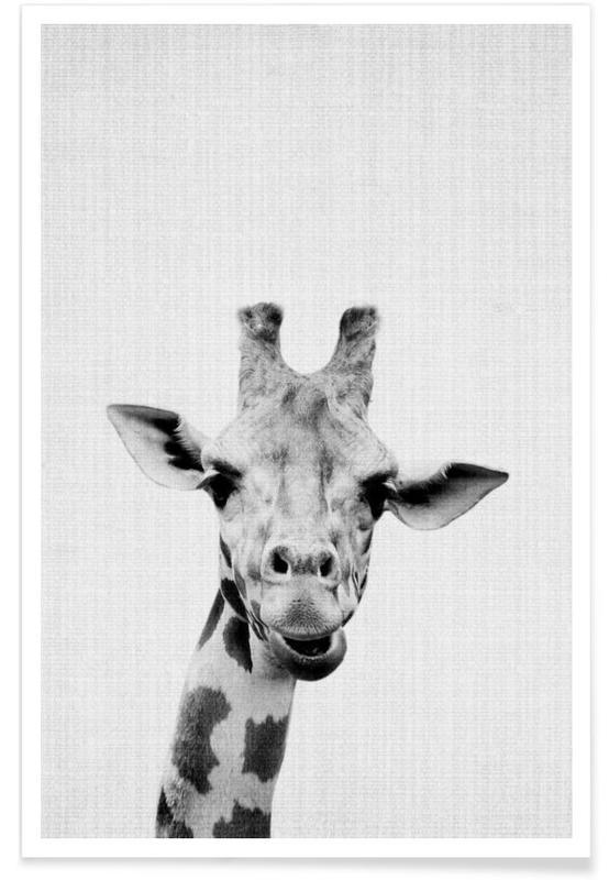 Girafes, Art pour enfants, Noir & blanc, Girafe - Photo en noir et blanc affiche