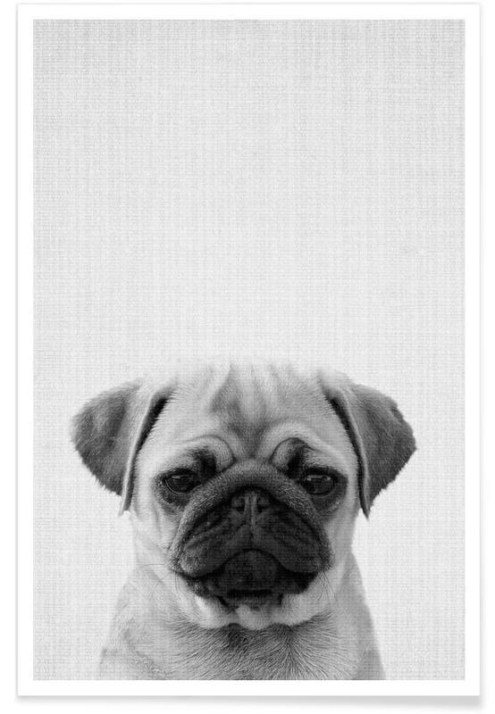 Art pour enfants, Chiens, Noir & blanc, Carlin - Photo en noir et blanc affiche