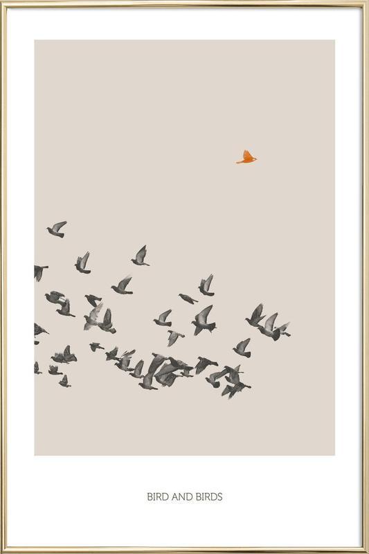 Bird And Birds Poster in Aluminium Frame