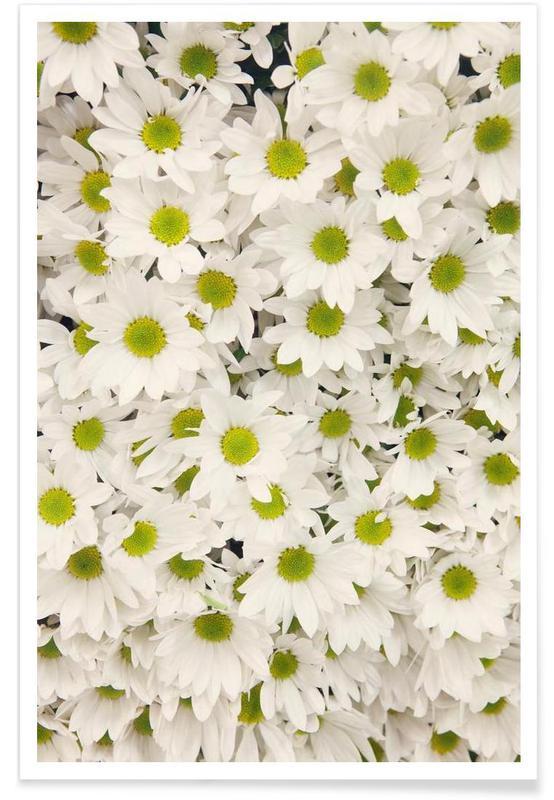 Daisy-Fotografie -Poster