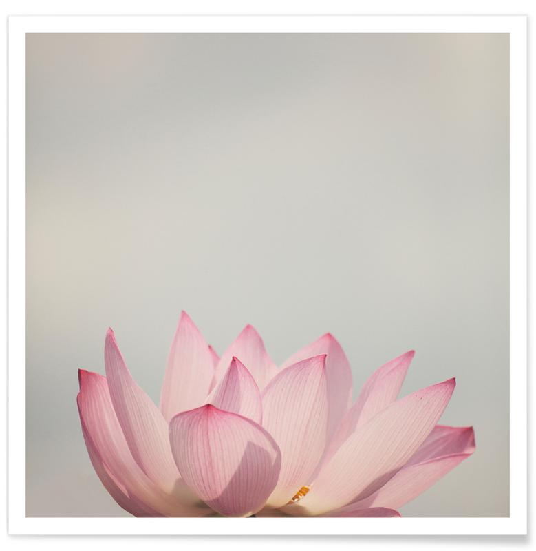 Lotus Photograph Poster